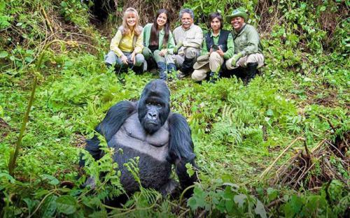 """Đến Rwanda, """"mục sở thị"""" Gorilla – King Kong phiên bản đời thực"""
