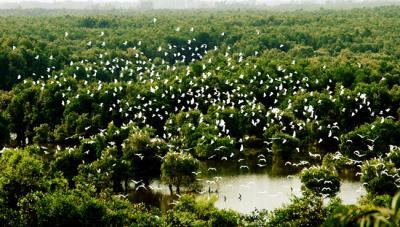 Vườn quốc gia Tràm Chim - Điểm đến số 1 cho hành trình khám phá thiên nhiên