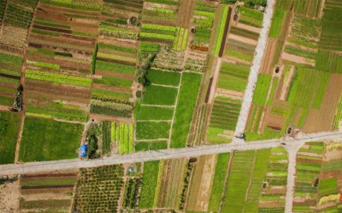 Về Trà Quế - ngôi làng nhỏ nguyên vẹn nếp quê xưa