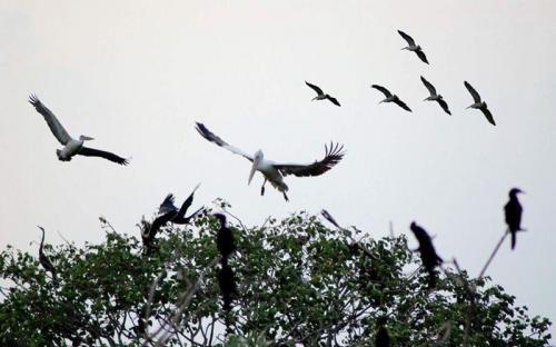 Vườn chim Bạc Liêu - điểm tham quan hấp dẫn
