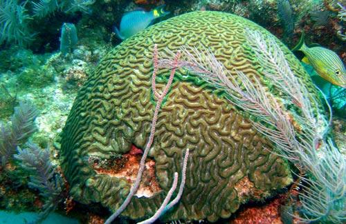 Photo tour khám phá các đảo san hô