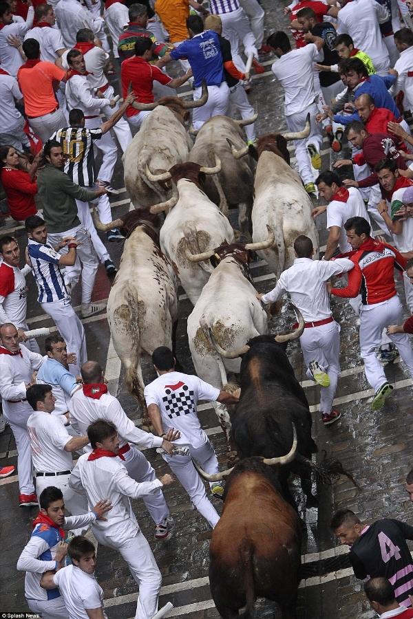 Lễ hội bò đuổi San Fermin