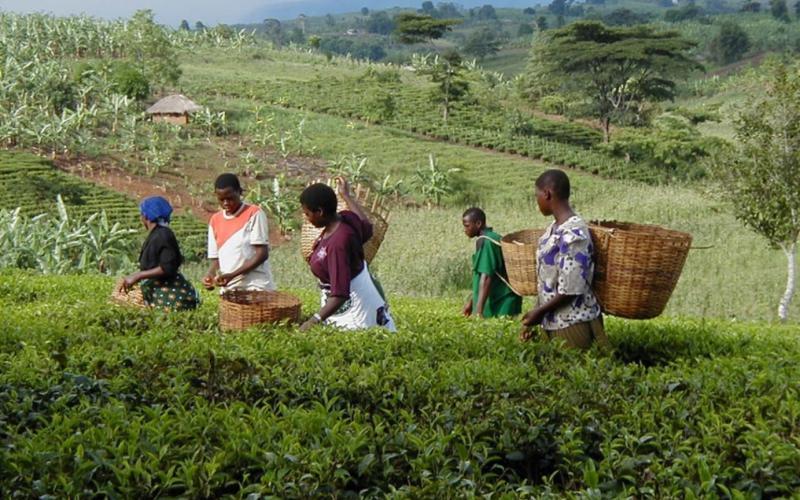 Tanzania thúc đẩy quảng bá du lịch vùng hồ Victoria
