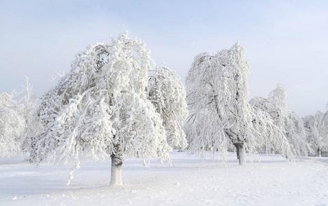 Cây cối đóng băng trắng xóa như trong xứ sở thần tiên