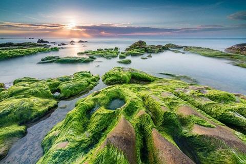 Ray hồng trên biển xanh – Cổ Thạch, Bình Thuận