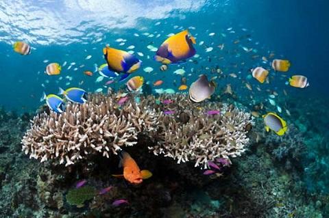 Bơi nhẹ nhàng để các sinh vật biển không trốn mất