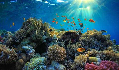 Ánh sáng dưới biển không đảm bảo cho bạn có ảnh đẹp