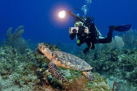 Bơi nhẹ nhàng để các sinh vật không chạy trốn
