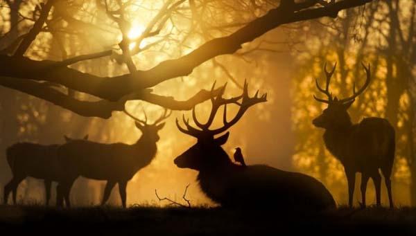 Ảnh đẹp thiên nhiên12