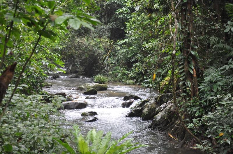 Băng rừng, vượt suối để chinh phục đỉnh Chư Yang Sin