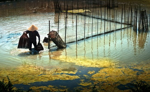 Bắt cá trên phá Tam Giang