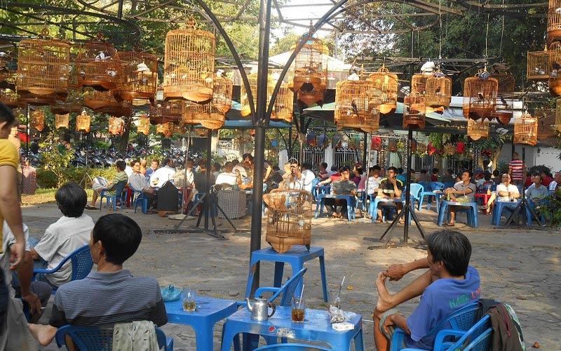 cafe chim Tao Đàn