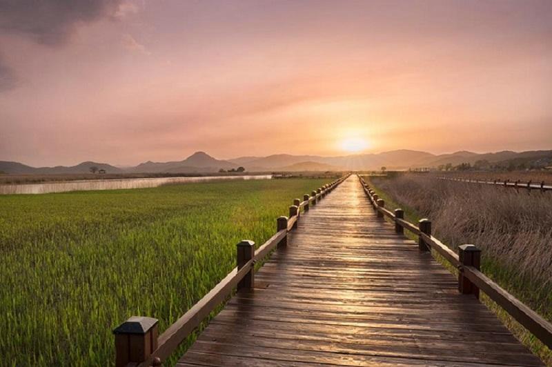 Công viên sinh thái Vịnh Suncheonm- địa điểm lý tưởng để ngắm hoàng hôn