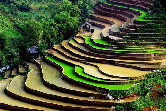 cat%20cat4 Báo điện tử quốc tế bình chọn ruộng bậc thang Sa Pa đẹp nhất thế giới