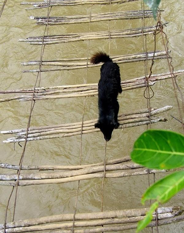 Những chiếc cầu treo đáng sợ nhất Việt Nam9