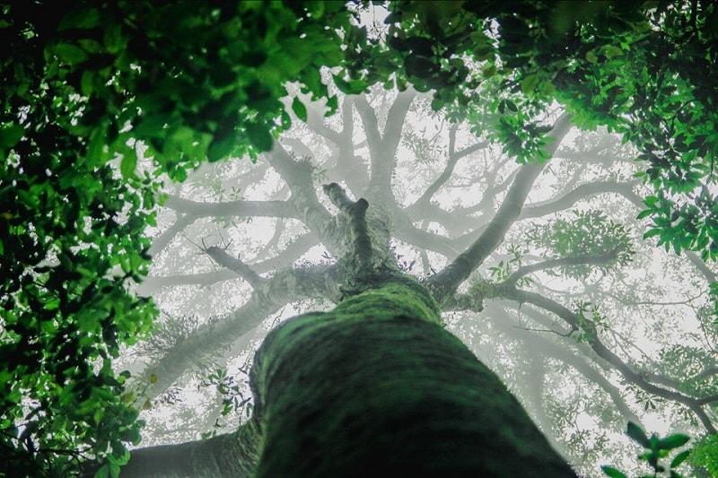 ó rất nhiều cây cổ thụ bao xanh quanh năm xanh mát vài người mới ôm xuể được