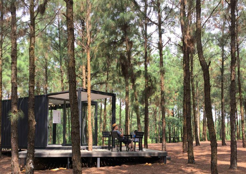 rừng thông ở Việt Nam