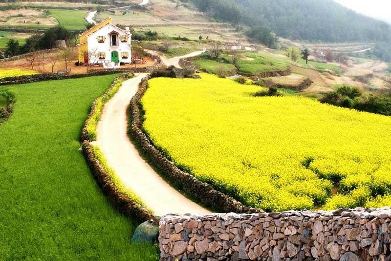 Đảo Cheongsan điểm sống chậm bình yên ở xứ sở kim chi