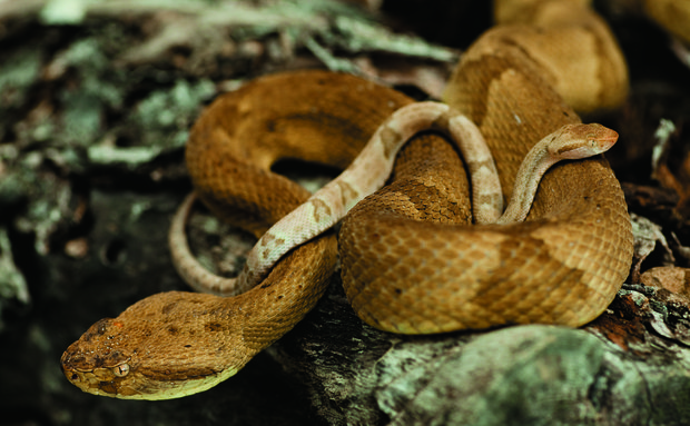 Đảo rắn
