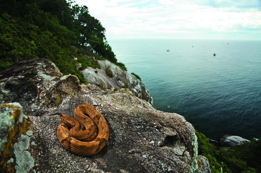 Đảo rắn2