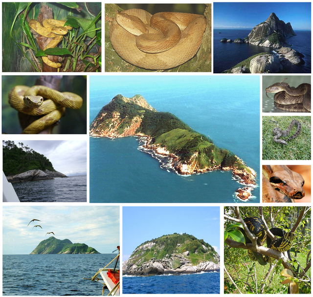Đảo rắn3