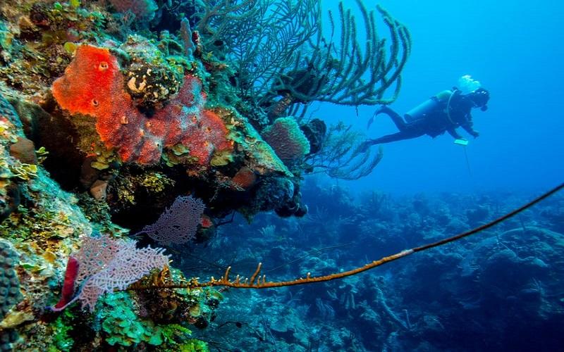Trong lòng hố có vô vàn những loài sinh vật biển rực rỡ sắc màu