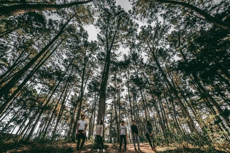 Quang cảnh đồi thông Yên Minh được ví như Đà Lạt của miền Bắc