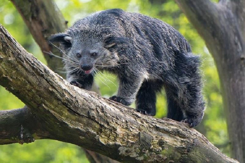 Động vật quý hiếm vẫn còn cư trú ở vườn quốc gia Tam Đảo
