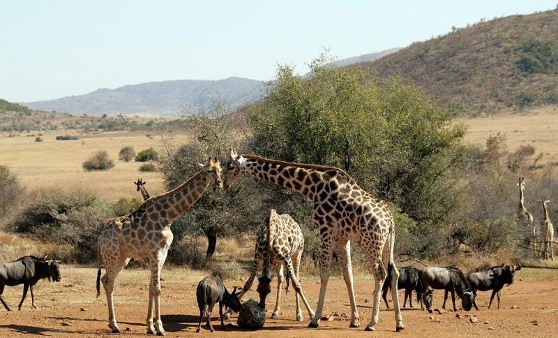 Du lịch Nam Phi