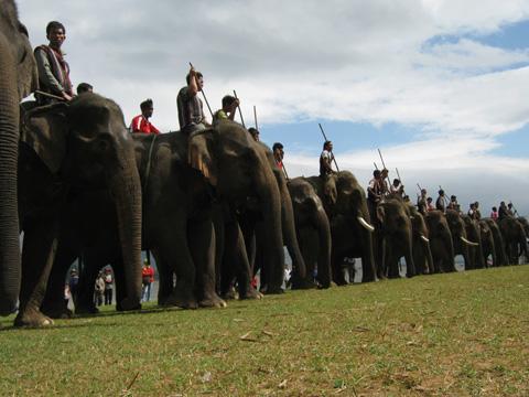 lễ hội đua voi ở Tây Nguyên