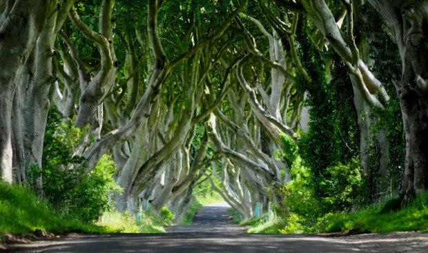Hàng rào bóng tối, Ireland