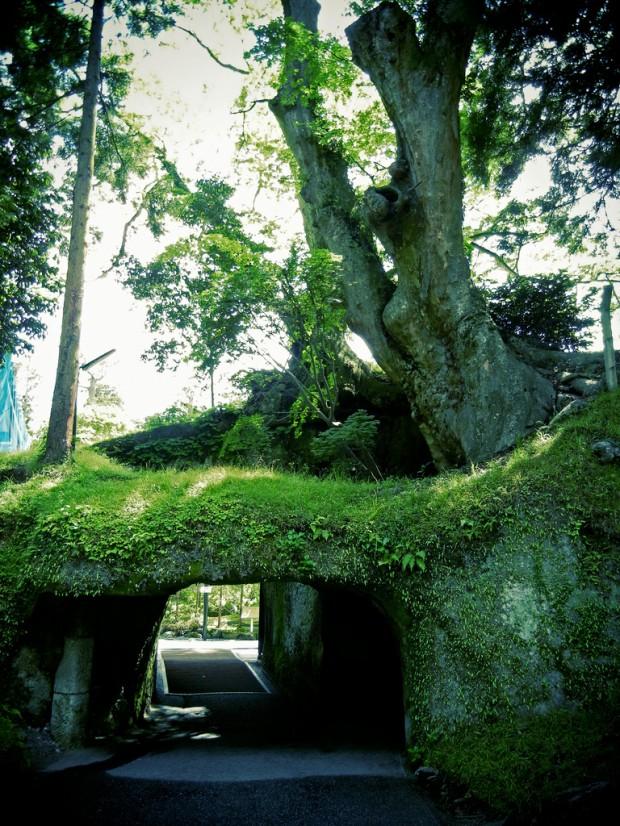 Đường hầm cây ở Matsushima-machi, Nhật Bản.