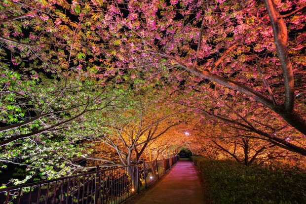 Đường hầm của tình yêu ở Kawazu-cho, Nhật Bản