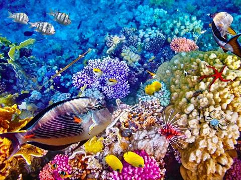 Rạn san hô và quần thể cá nhiệt đới ở Great Barrier, Úc