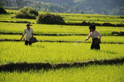 hạt gạo dẻo thơm