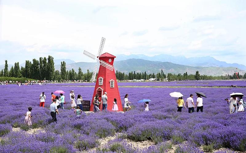 Sắc tím oải hương bao trùm cả vùng đất Tân Cương, Trung Quốc