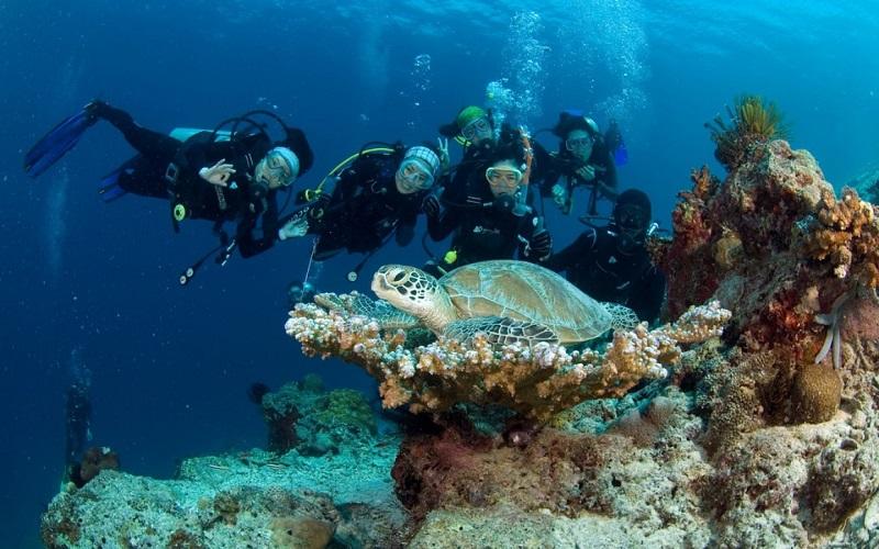 Sipadan là một trong những điểm lặn tốt nhất trên thế giới
