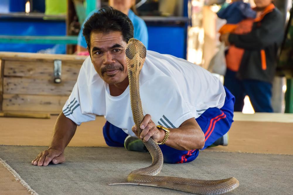 Kỳ lạ ngôi làng nuôi rắn độc như thú cưng ở Thái Lan