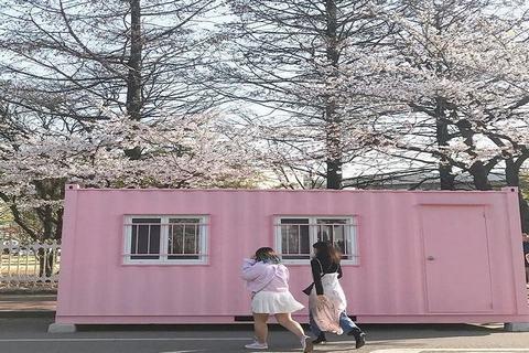 Mùa-hoa-anh-đào-Hàn-Quốc
