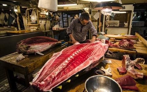 Xẻ thịt cá ngừ tươi ở chợ cá Tsukij