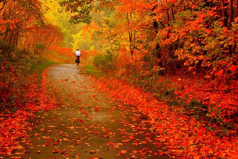 Những bức ảnh gợi nhớ mùa thu vàng rực rỡ - Du lịch nào!   Du lịch nào!