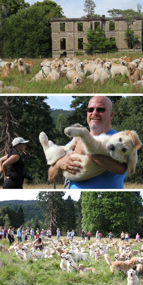 Lễ hội Chó săn Golden Retriever ở Scotland