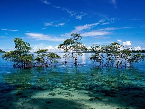 Đảo Havelock - Ấn Độ