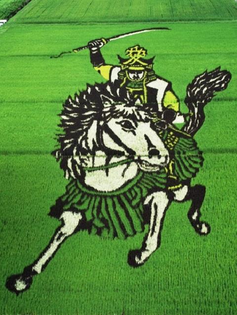 Thích thú với cánh đồng lúa đầy nghệ thuật ở Nhật Bản