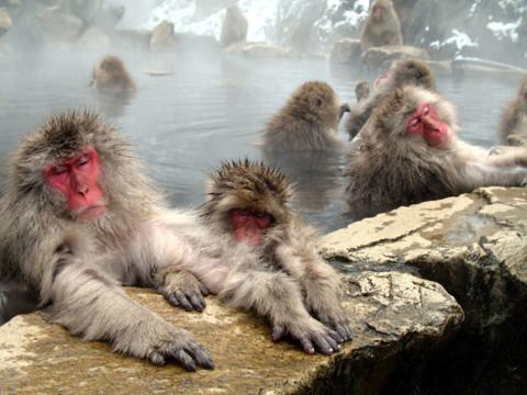 Vùng suối nước nóng Onsen.