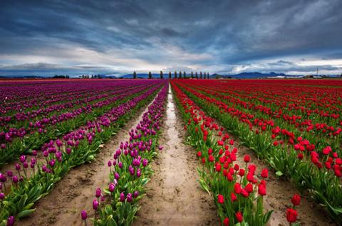 Thung lũng Skagit, Washington, Mỹ