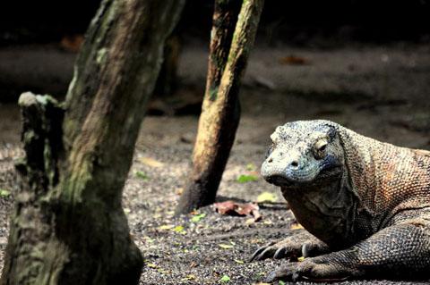 Đảo Komodo, Indonesia