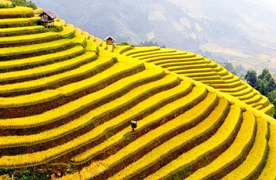 Du lịch ruộng bậc thang Hà Giang