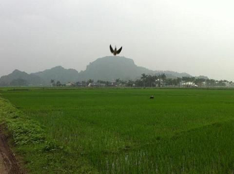 Núi Voi hùng vĩ uy nghi