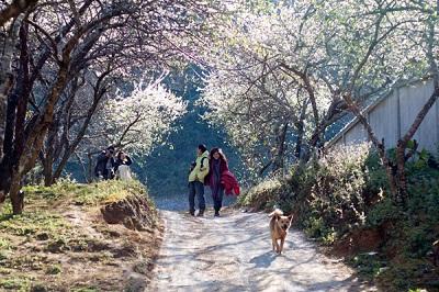 Đi bộ tham quan du lịch Mai Châu